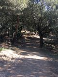 Broad path through the woods Royalty Free Stock Photos