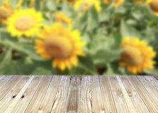 Broad planks and Sunflower blossom of blur background. Royalty Free Stock Photography