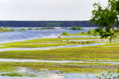 Broad river flooded green meadow Royalty Free Stock Image