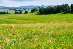 The broad steppe Stock Photography
