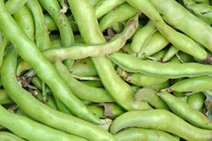 Broadbeans Royalty Free Stock Photo