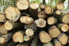 Broadleaf forest - pile of tree boles Royalty Free Stock Images