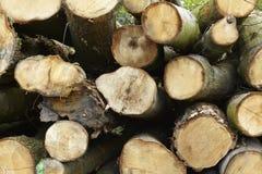 Broadleaf forest - pile of tree boles Stock Images