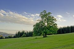 Broadleaved Tree. Standing Alone in Czech Landscape Royalty Free Stock Photography