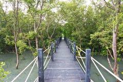 broadwalk森林美洲红树 免版税库存照片