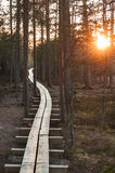 Broadwalk in forest at sunset Stock Photo