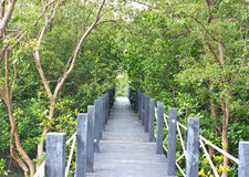 Broadwalk in Mangrove Forest. East of thailand Stock Photo