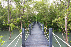 Broadwalk in Mangrove Forest. East of thailand Royalty Free Stock Photo