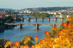 Broar av Prague över den VLtava floden Royaltyfri Foto