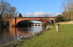 Broar i mödomshinna längs flodThemsen Royaltyfri Foto