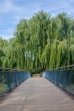 Brobana med trädöverhäng Fotografering för Bildbyråer