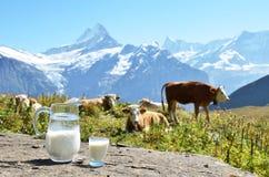 Brocca di latte contro il gregge delle mucche Fotografia Stock Libera da Diritti