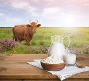 Brocca di latte e ricotta sul prato con il fondo della mucca Immagine Stock