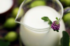 Brocca di vetro del latte con il trifoglio rosa Immagini Stock