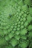 Broccoflower - cavolfiore verde Immagini Stock Libere da Diritti