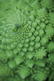 Broccoflower - green cauliflower Royalty Free Stock Images