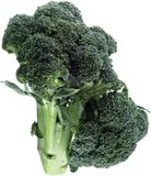 Broccoli. Isolated royalty free stock photo