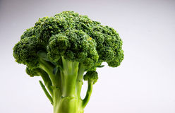 Broccoli. In the white backgroud Royalty Free Stock Photography
