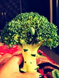 broccoli photos libres de droits