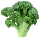 Broccoli. Single broccoli floret isolated on white background Royalty Free Stock Image
