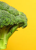 Broccoli. On yellow Royalty Free Stock Photo
