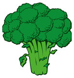 Broccoli. Hand-drawn illustration of broccoli (vegetable Royalty Free Stock Photos