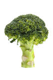 Broccoli. Fresh broccoli isolated on white background Stock Photos