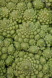 Broccoli. Roman cauliflower detail macro stock photo