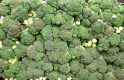 Broccoli royaltyfria bilder