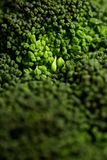 Broccoli 3. Photograph in study of vegetables, showing details Royalty Free Stock Photos