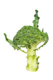 Broccoli Fotografie Stock