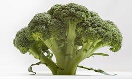 Broccoli arkivfoton