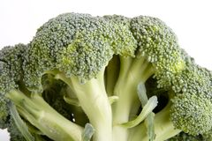 Broccoli. A stalk of broccoli Stock Images