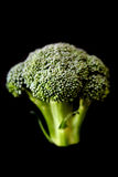 broccoli Royaltyfri Bild