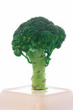 Broccoli branch. Isolated broccoli branch on the plate Stock Image