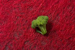 Broccoli branch on red background royalty free stock photo