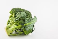 Broccoli Brassica oleracea Royalty Free Stock Image