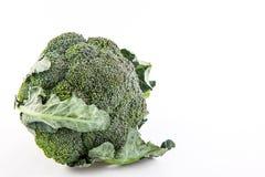 Broccoli Brassica oleracea Stock Image