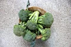 Broccoli. Brassica oleracea var italica, Vegetable crop with green flower head with swollen stalks, buds distinct unlike cauliflower royalty free stock images