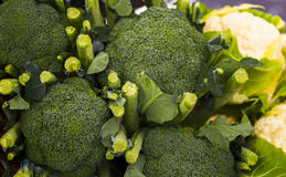 Broccoli and Cauliflowers at a Local Market Stock Photos