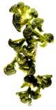 Broccoli che compongono Immagini Stock