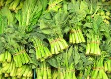 Broccoli cinesi Immagini Stock Libere da Diritti