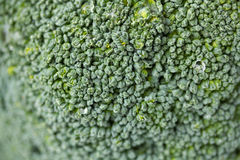 Broccoli Close up Stock Photography