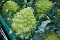 Broccoli, Close-up, Colors Royalty Free Stock Photo