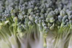 Broccoli Closed-Up Royalty Free Stock Photography