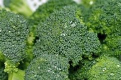 Broccoli Closeup Stock Images