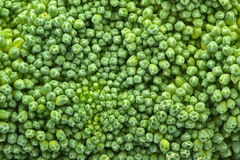 Broccoli closeup Royalty Free Stock Image