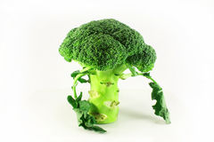 Broccoli closeup. On a white background Stock Photography
