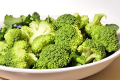 Broccoli closeup. Raw broccoli ready for cooking, organic product from Italian agriculture Stock Images