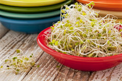 Broccoli and clover sprouts Stock Images
